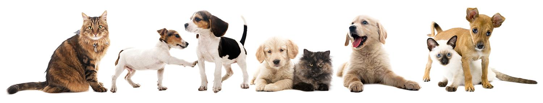 dog-cat-group