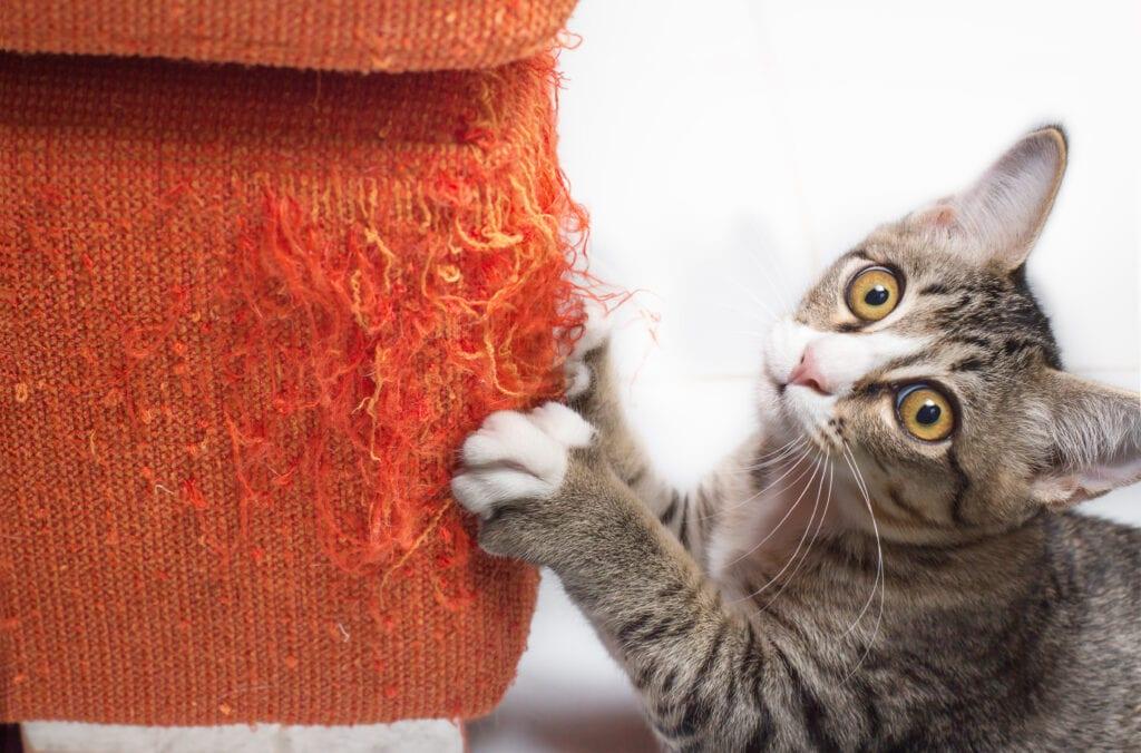 Kitten Clawing Orange Sofa