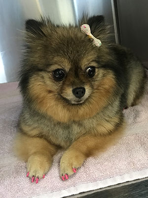 darian-grooming-dog2